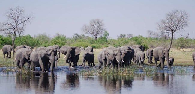 elephants in africa big five safari