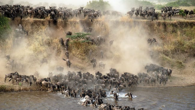 northern serengeti wildebeest migration